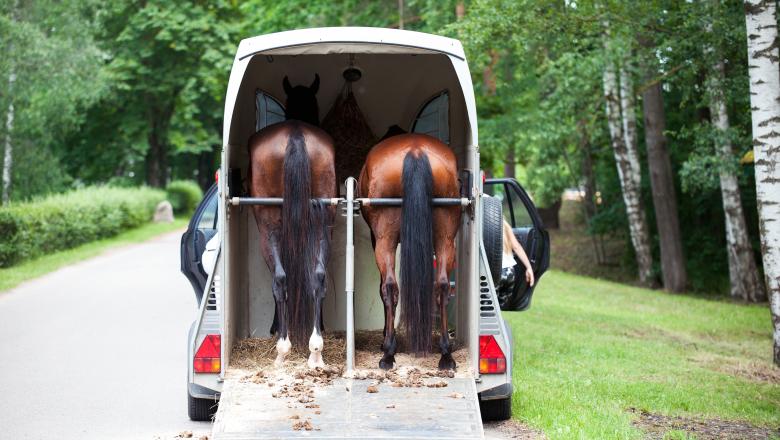 Hästtransport med två hästar i